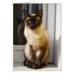 Härlig Siamese katt