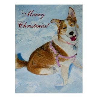 Härlig siberian husky i snö vykort