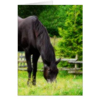 Härlig svart häst hälsningskort