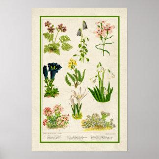 Härlig vintage inspirerad botanisk blommigt för poster