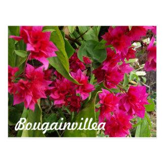 Härliga Bougainvilleagåvor Vykort
