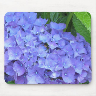 Härliga purpurfärgade vanlig hortensia musmatta