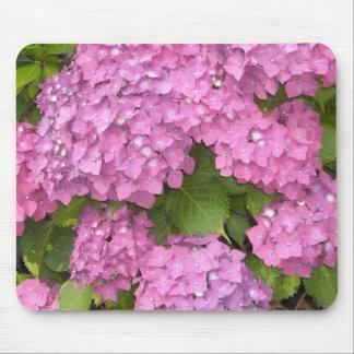 Härliga rosa vanlig hortensia musmatta
