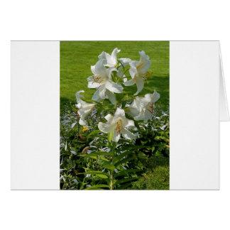 Härligt blommatryck hälsningskort
