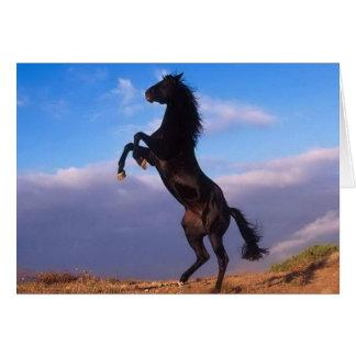 Härligt fostra svart kort för hästfotofödelsedag