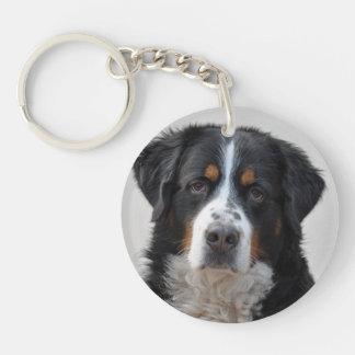 Härligt foto för Bernese berghund, gåva