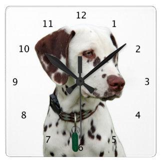 Härligt foto för Dalmatian hund Fyrkantig Klocka