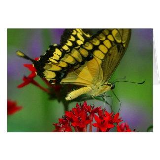 Härligt monarkfjärilsfoto hälsningskort