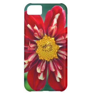 Härligt rött fodral för dahliatrycktelefon iPhone 5C fodral