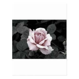 Härligt urblektt rosa rostryck vykort