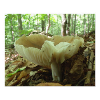 Härligt vid natur… mushrooms. fototryck