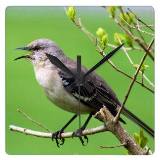 Härmfågelväggen tar tid på fyrkantig klocka