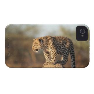 Harnas djurlivfristad, Namibia iPhone 4 Skydd