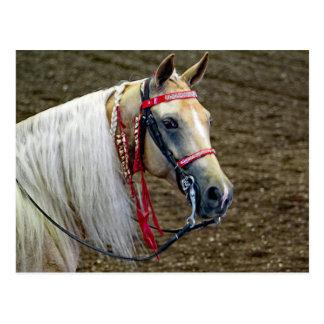 Häst 662 vykort
