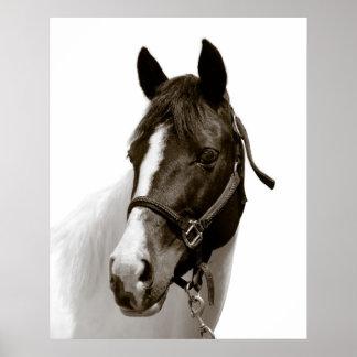 Häst Print