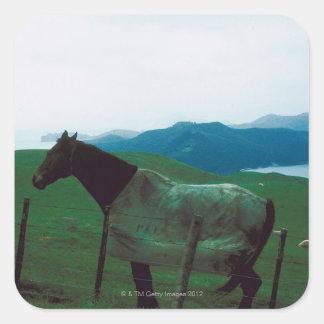 Häst bak staket fyrkantigt klistermärke