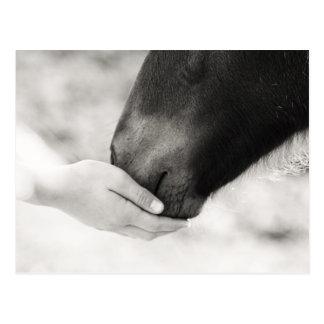 Häst Horse Vykort