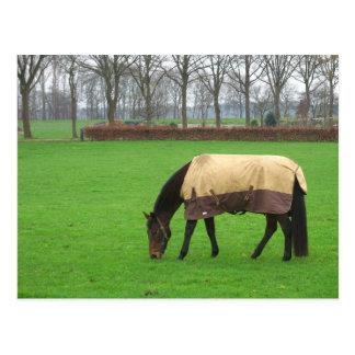 Häst i ängvykort vykort