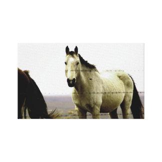 Häst i backarna canvastryck