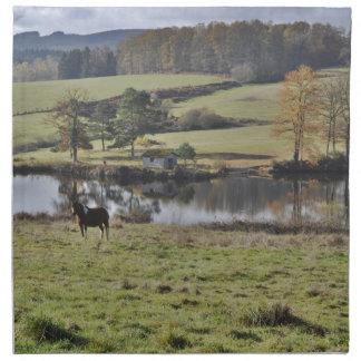 Häst i en landskap 2 tygservett