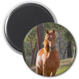 Häst i skogen magnet