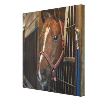 Häst i stall canvastryck