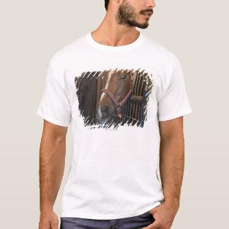 Häst i stall tröjor