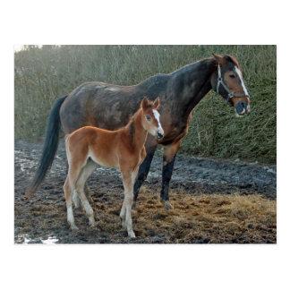 Häst med fölvykortet vykort