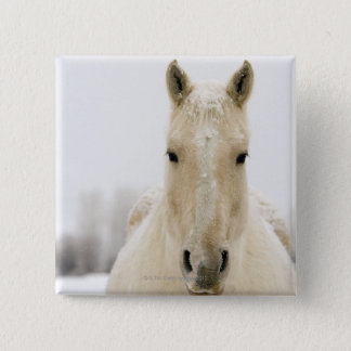 Häst med snö på huvudet standard kanpp fyrkantig 5.1 cm