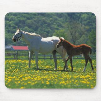 Häst och henne fölanseende i ett fält musmattor