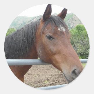 häst över staket runt klistermärke