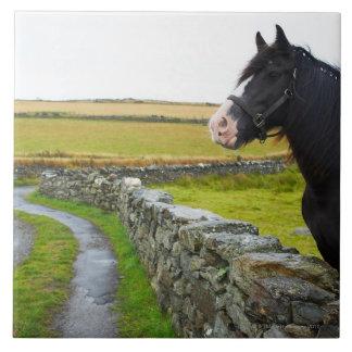 Häst på lantgård i lantliga England Kakelplatta