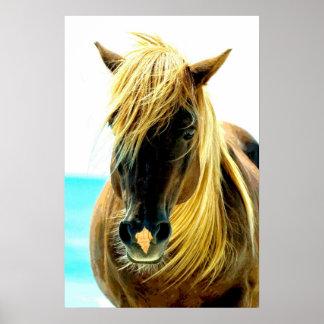Häst på strand poster
