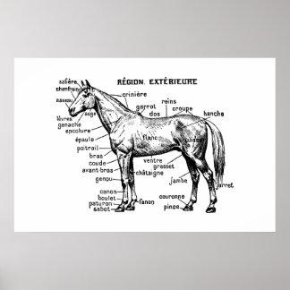 Häst Poster