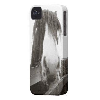Häst som plirar över staket Case-Mate iPhone 4 skydd