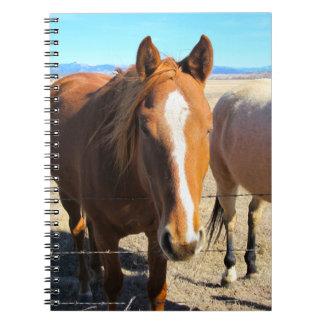 Hästanteckningsbok Anteckningsbok Med Spiral