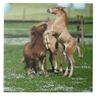 Hästar 3 kakelplatta