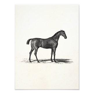 Hästar för hästkapplöpning för tävling för vintage foton