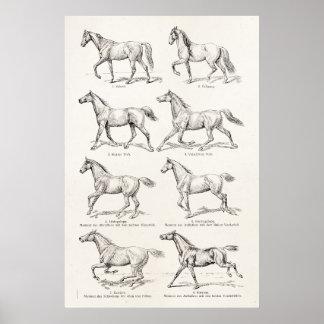 Hästar för illustration för gåendear för poster