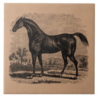 Hästar för Thoroughbred för häst för Kakelplatta
