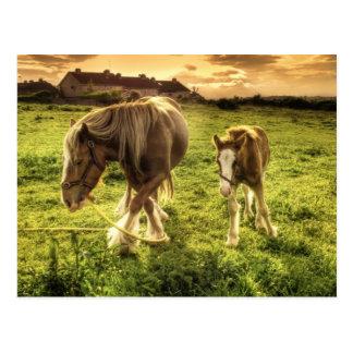 Hästar fostrar och fölet vykort