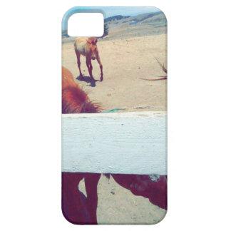 Hästar iPhone 5 Cover