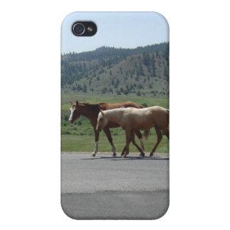 Hästar iPhone 4 Hud
