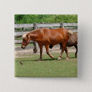 Hästar knäppas emblem standard kanpp fyrkantig 5.1 cm