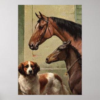 Hästar och St Bernard vintagekonst Poster