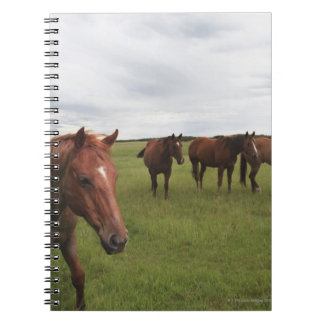 Hästar på ett fält anteckningsbok med spiral