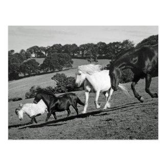Hästar på lek vykort