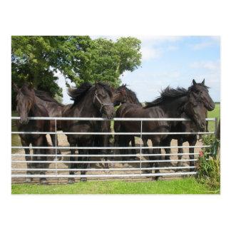 Hästar på staketvykortet vykort