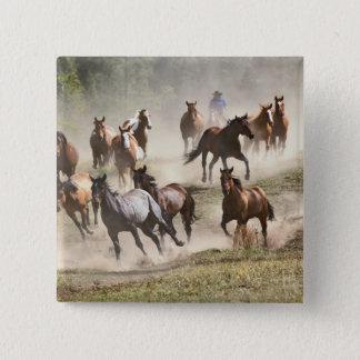 Hästar som är rinnande under roundup, Montana Standard Kanpp Fyrkantig 5.1 Cm