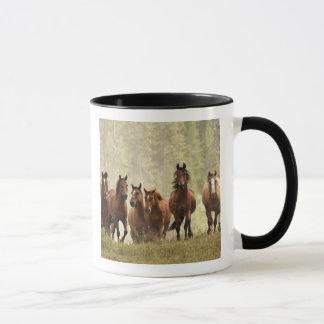 Hästar som krönar den små backen under roundup, 2 mugg